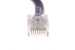 CAT6 Ethernet Patch Cable, Non-Booted, 1 Foot, Purple